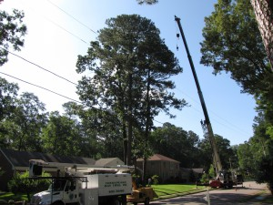 2009-06-12-tree-removal-001