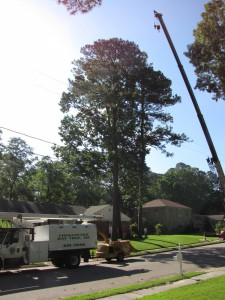 2009-06-12-tree-removal-002