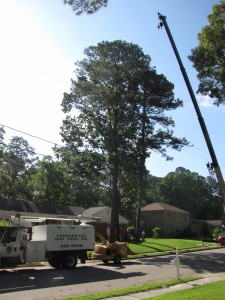 2009-06-12-tree-removal-003