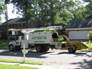 2009-06-12-tree-removal-005