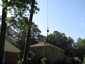 2009-06-12-tree-removal-006