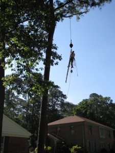 2009-06-12-tree-removal-007
