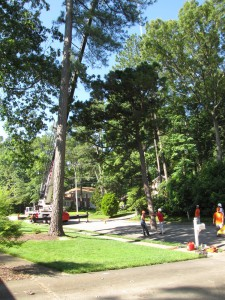 2009-06-12-tree-removal-008
