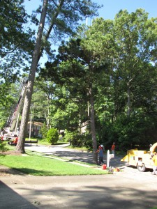 2009-06-12-tree-removal-009
