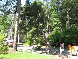 2009-06-12-tree-removal-010