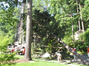 2009-06-12-tree-removal-011