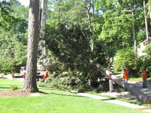 2009-06-12-tree-removal-012