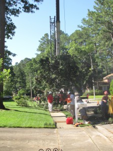 2009-06-12-tree-removal-013