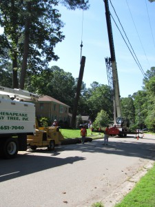 2009-06-12-tree-removal-015