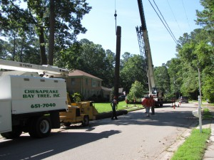 2009-06-12-tree-removal-016