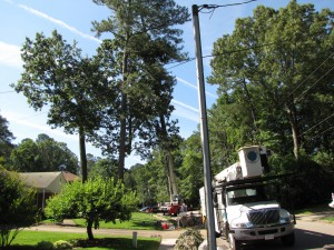 2009-06-12-tree-removal-017