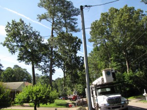 2009-06-12-tree-removal-018