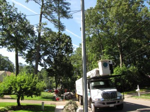 2009-06-12-tree-removal-019