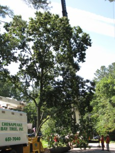 2009-06-12-tree-removal-022