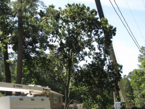 2009-06-12-tree-removal-023