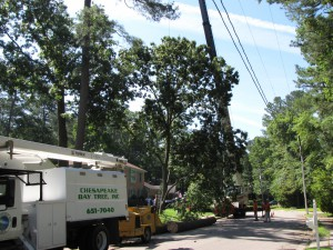 2009-06-12-tree-removal-024