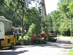 2009-06-12-tree-removal-025