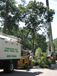 2009-06-12-tree-removal-026