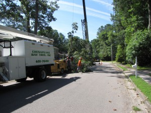 2009-06-12-tree-removal-027