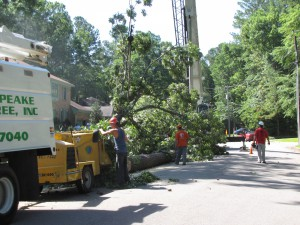 2009-06-12-tree-removal-028