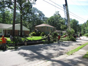 2009-06-12-tree-removal-029