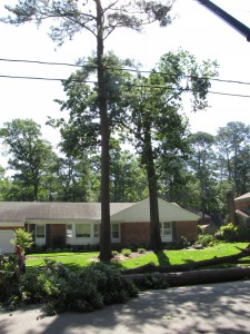 2009-06-12-tree-removal-030