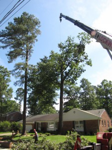 2009-06-12-tree-removal-031