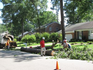 2009-06-12-tree-removal-032