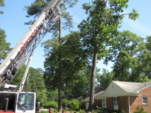 2009-06-12-tree-removal-033