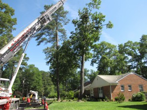 2009-06-12-tree-removal-034