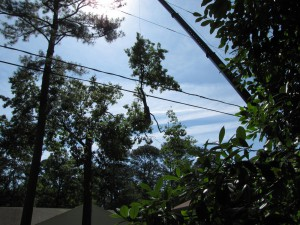 2009-06-12-tree-removal-035