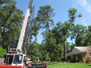 2009-06-12-tree-removal-036