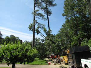 2009-06-12-tree-removal-038