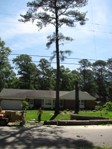 2009-06-12-tree-removal-039