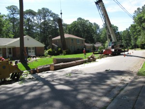 2009-06-12-tree-removal-040