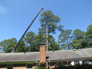 2009-06-12-tree-removal-042