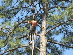 2009-06-12-tree-removal-043