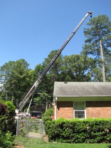 2009-06-12-tree-removal-045