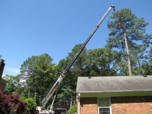 2009-06-12-tree-removal-046