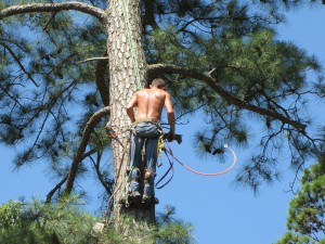 2009-06-12-tree-removal-047