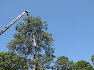 2009-06-12-tree-removal-048