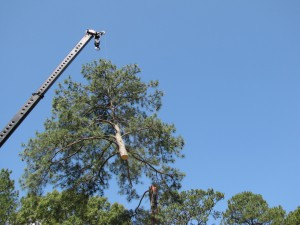 2009-06-12-tree-removal-049