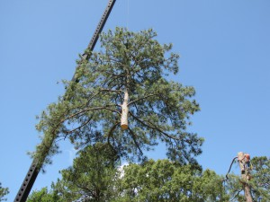 2009-06-12-tree-removal-050