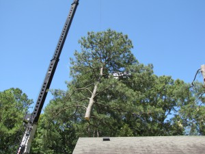2009-06-12-tree-removal-051