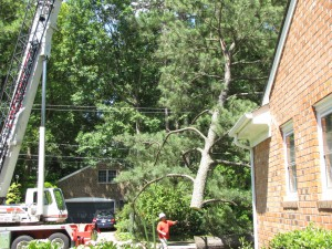 2009-06-12-tree-removal-052