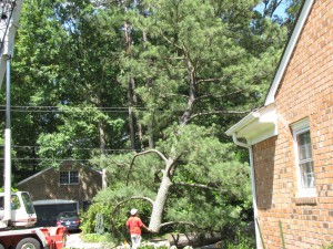 2009-06-12-tree-removal-053
