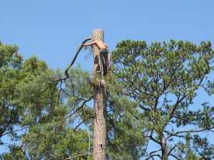 2009-06-12-tree-removal-054