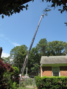 2009-06-12-tree-removal-056