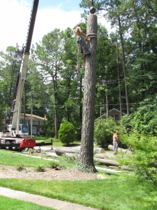 2009-06-12-tree-removal-061