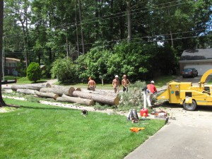 2009-06-12-tree-removal-062